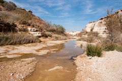 Water spring in a desert Stock Photo