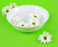 Water and Spring Flowers stock photography
