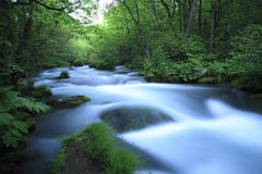 Water spring in forest Royalty Free Stock Photo