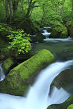 Water spring in forest Stock Photo