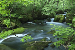 Water spring in forest Stock Image