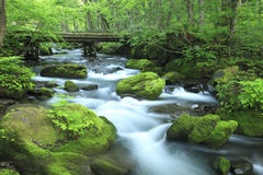 Water spring in forest Stock Photos