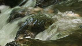 Water spring in high mountains - closeup stock video footage