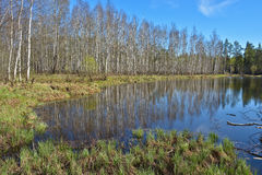 Water spring landscape. Royalty Free Stock Photos