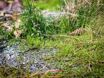 Water Spring Life of Green Grass Growing. This image was taken in Hetch Hetchy, part of Yosemite National Park during Summer of 2018 royalty free stock image