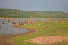 Water springing stump Stock Image