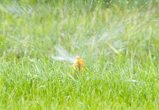 Water sprinkler. On green lawn Royalty Free Stock Photo