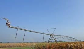 Water sprinkler in the corn field Royalty Free Stock Photo