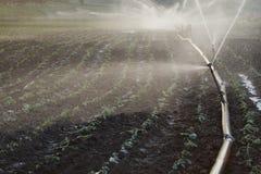 Water sprinkler Royalty Free Stock Image