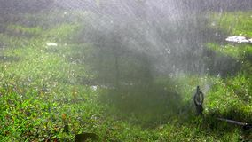 Water Sprinkler in garden stock video footage