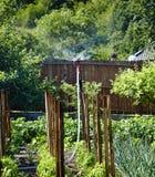Water sprinkler in the garden Stock Image