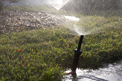 Water sprinkler for grass Royalty Free Stock Image