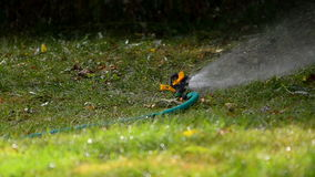 Water sprinkler on a lawn stock footage