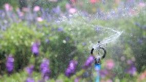 Water sprinkler spray watering, flower garden background, HD Clip. stock video
