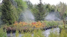Water sprinkler system working on a garden nursery plantation. Water irrigation system stock footage