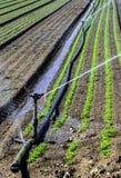 Water sprinkler system working on a nursery plantation Stock Image