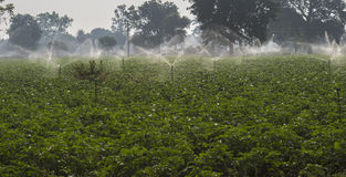 Water Sprinklers Royalty Free Stock Image