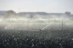 Water sprinklers on crops Royalty Free Stock Photo