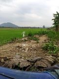 Water sprinkling and water Leaking. Water Leaking out of pipe in rice growing area Stock Images