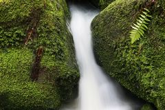 Water and stones. With moss and fern Stock Photo