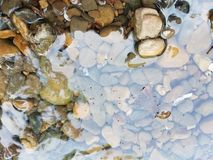 Water and stones with insects on water. Water and stones in a river with insects on the water Royalty Free Stock Images