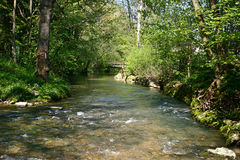 Water, Stones and Trees. Transparent water, with nice green background royalty free stock images