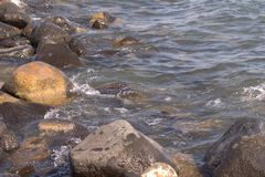 Water and stones. Wet stones on tiberias beach Stock Photos