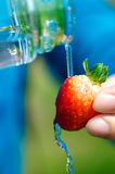 Water and Strawberry Royalty Free Stock Photography