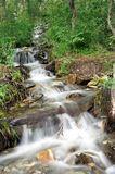 Water stream. Cascades of the mountain river in the forest Stock Photography