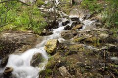 Water stream. Cascades of the mountain river in the forest Royalty Free Stock Photo