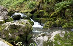 Water stream. Cold and clear water stream in the mountain forest Royalty Free Stock Images