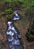 Water stream. Flowing through the forest royalty free stock photography