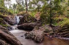 Water stream amidst trees Royalty Free Stock Images