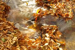 Water stream during autumn. Water flowing through the autumn leafs Royalty Free Stock Image