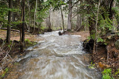 Water stream in Colorado Stock Photo