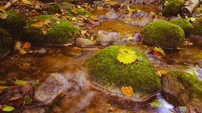 Water stream in fall forest Royalty Free Stock Photography