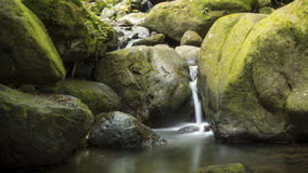 Water Stream. Water finding its way through a moss covered forest Stock Photos