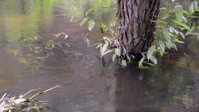 Tree trunk in water. Water stream flowing around big tree stem stock video footage