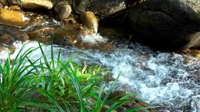Water stream flowing among stones in mountain river. Wild landscape with flow stream water in river. Panoramic view wild. Stony river with fast flow stock video footage