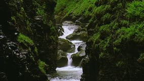 Water of stream flows between mountains covered by greenery. Summer day. Landscape. Nature. Stones. Water of stream flows between two mountains covered by stock video footage
