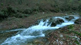 The stream into the wood stock footage