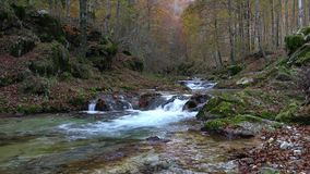 The stream into the wood stock video footage