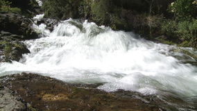 Water stream in a forest stock video
