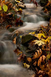 Water stream in the forest during autumn Stock Images