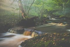 water stream in forest, mist and sun, very beautiful stock photo