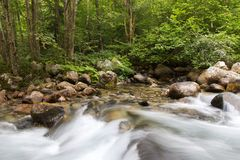 Water stream in forest. Motion blurred water stream landscape in a green forest Royalty Free Stock Images