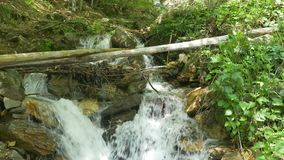 Water Stream in Forest. Summer waterfall view in the forest stock video footage