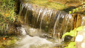 Water stream. In green nature stock video