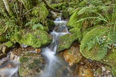 Water stream with mossy rocks in Muniellos Biosphere Reserve. Sp. Water stream with mossy rocks in Muniellos Biosphere Reserve. Asturias royalty free stock photos