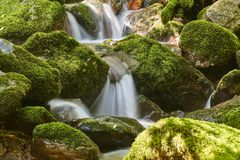 Water stream with mossy rocks in Muniellos Biosphere Reserve. Sp. Water stream with mossy rocks in Muniellos Biosphere Reserve. Asturias stock photos